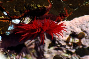 Beautiful underwater world at Solitary Islands Marine Park off Wooli NSW
