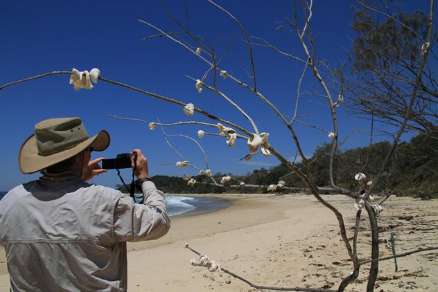 Photographers love the Yuraygir Coastal Walk in Northern NSW