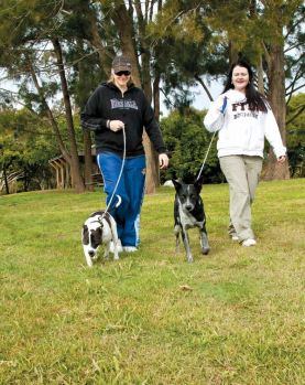 Bring your dog on your holiday to Wooli or Minnie Water